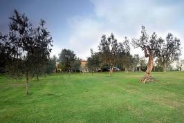 Ruime tuin met olijfbomen
